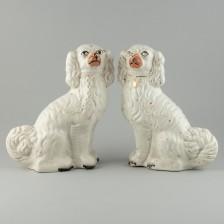 Staffordshirenkoirapari
