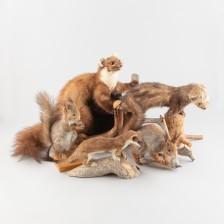 Täytettyjä eläimiä, 5 kpl