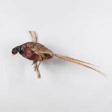 Täytettyjä lintuja, 2 kpl